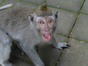 This is what a monkey looks like right before he lunges for your camera.