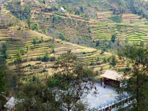Green terraced farmland, with the roof of the school in the lower right corner