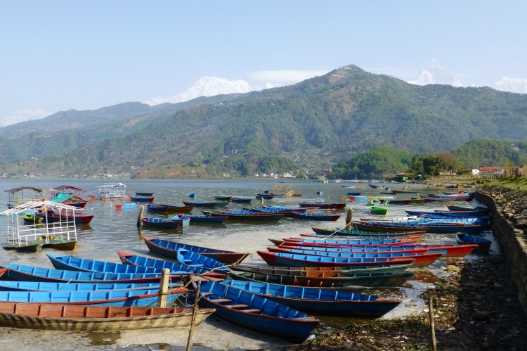 Row boats on Phewa Lake, with the Himalayas peeking in the background