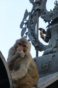 Cheeky monkey at Swayambhunath